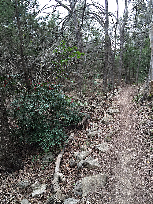 Dry Trail Feb 2015 - great Hills Park Austin, TX